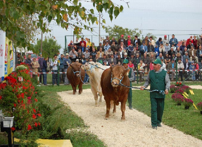 parada-taurilor