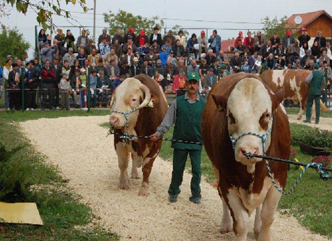parada-taurilor2